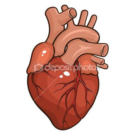 Человеческое сердце — стоковая иллюстрация #43277145