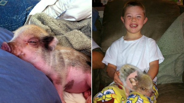 A Florida town grants a family a waiver to keep a small pig to help their special needs son.