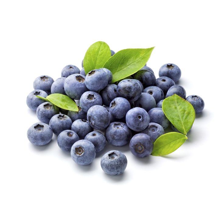 Plant Blueberry Dixi  2.0L