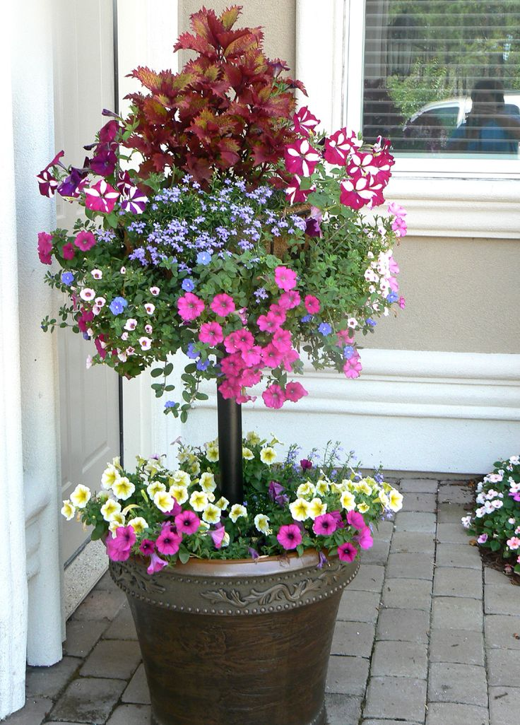 1365 Best Outdoor Plant Containers Images On Pinterest