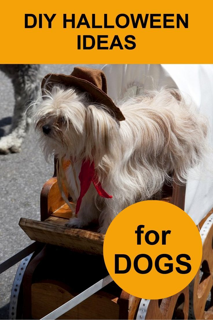 Best Diy Halloween Costumes For Dogs 2020 Dog Halloween Costumes