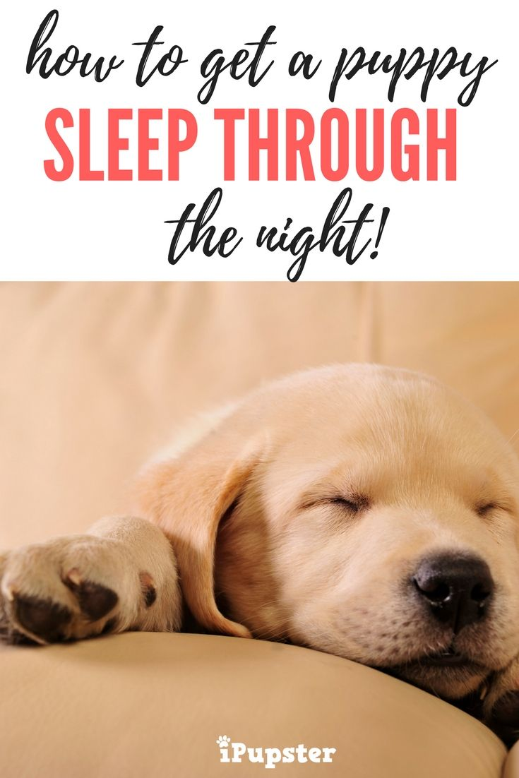 How To Get A Puppy To Sleep Through The Night Sleeping Puppies Getting A Puppy Kennel Training A Puppy