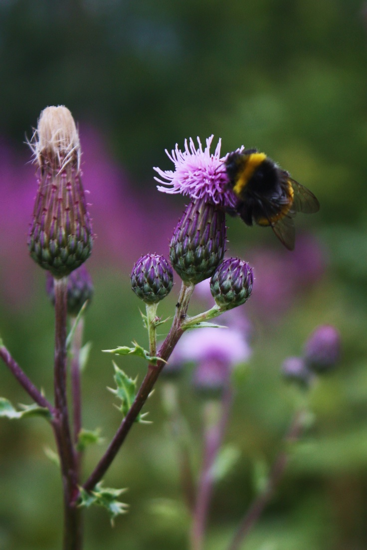 144 best Bumble bee.... images on Pinterest   Bees, Honey and Bee happy