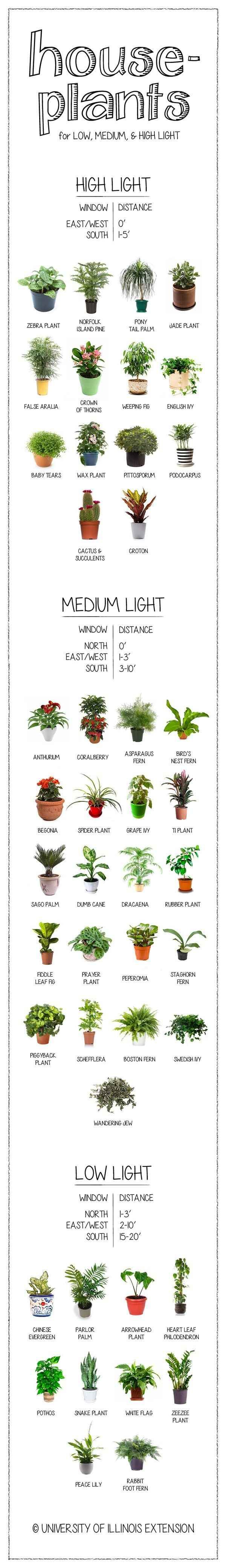 How much light does your houseplant need? Find out on this handy chart.