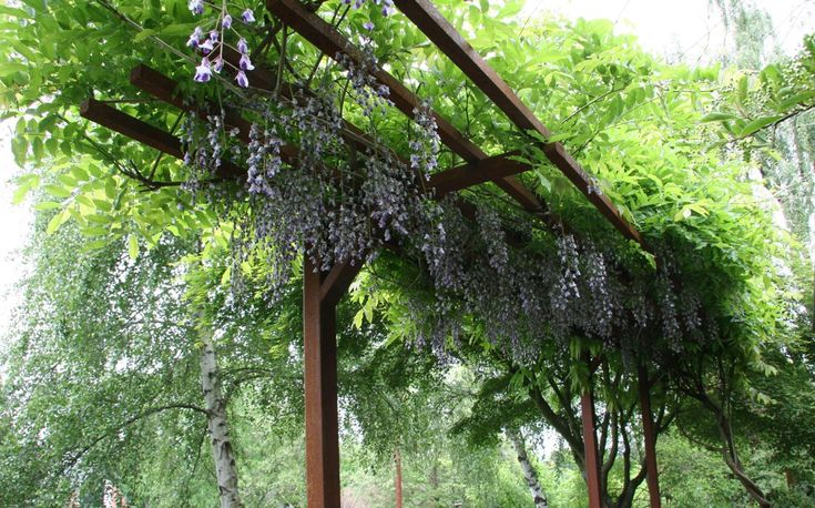The Only Support For Wisteria Vines Metal Grow It