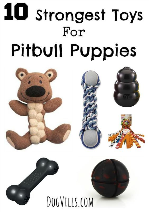 Does your pitty keep destroying all his toys within minutes? You need better toys! Check out these 10 strongest toys for pitbull puppies! No guarantees that they'll last forever, but at least they'll slow him down!