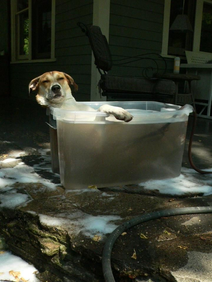 This dog clearly is one after my own heart..relax'in & chill'in in the tub...