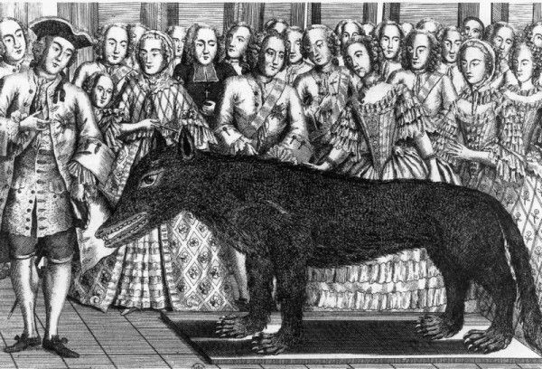 Antoine shows off the stuffed wolf at the King's Court in Versaille.