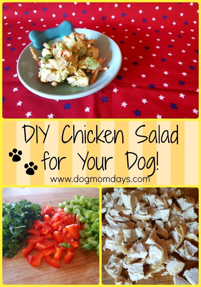 A delicious DIY chicken salad for dogs and humans!  DIY | Homemade | Food for Dogs | Recipes | Homemade Dog Treats | Dog Treats | Chicken Treats