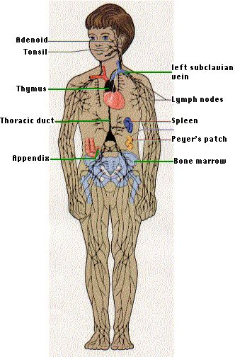 26 best Science: Biology images on Pinterest | Science biology, Science fair projects and