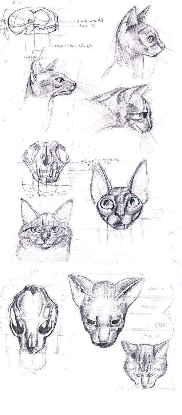 254 best Cats images on Pinterest | Animal drawings, Cat anatomy and ...