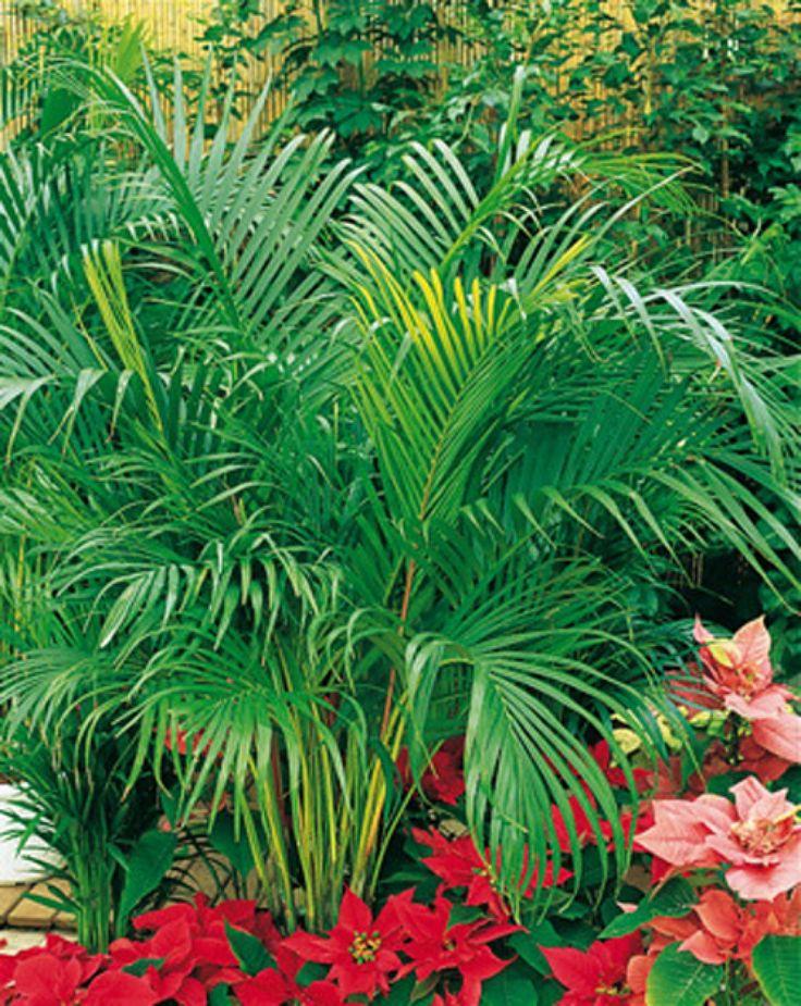 1000 id es sur le th me plantes d polluantes sur pinterest plante exterieur - Depollution par les plantes ...