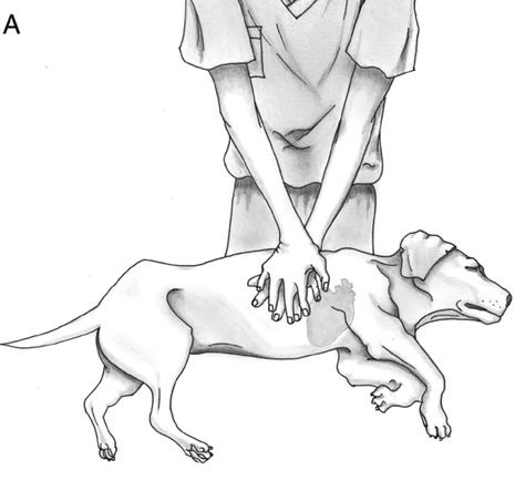 CPR techniques for dogs, every dog owner  should know how. I needed this last week!