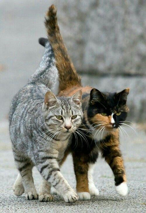 Two cat friends