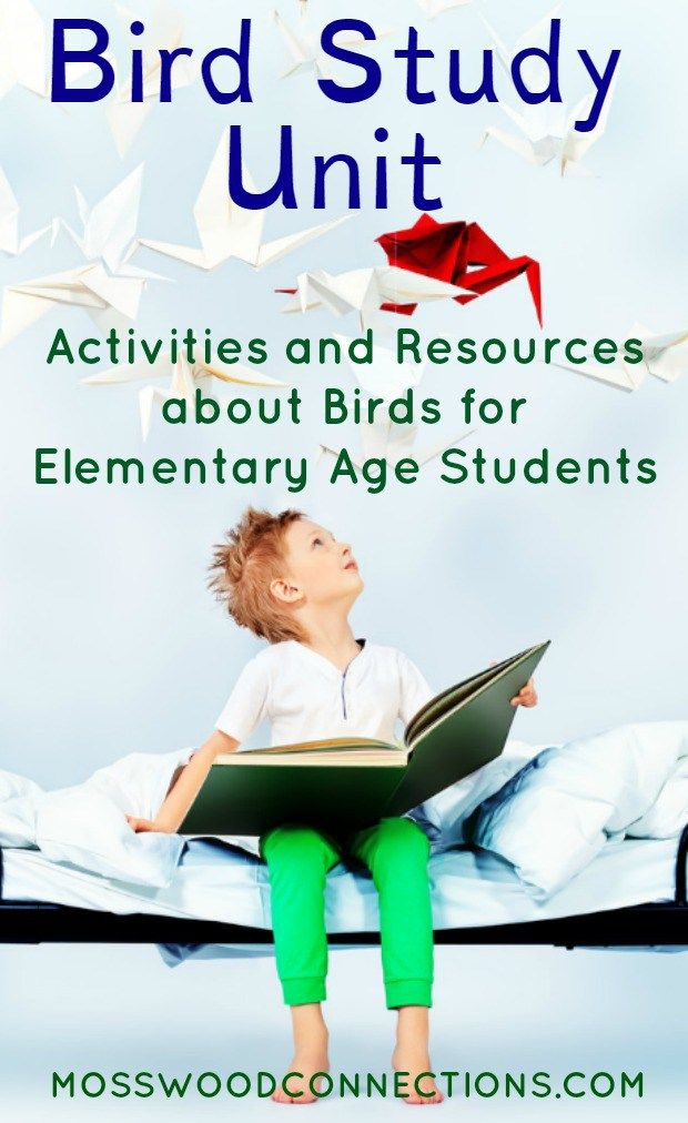 Bird Study Unit Activities and Resources for Elementary Age Students