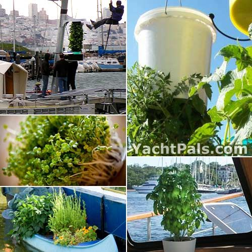 Growing Fruits and Vegetables on a Boat