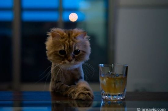 #cat #drink #animals #sweet #cute