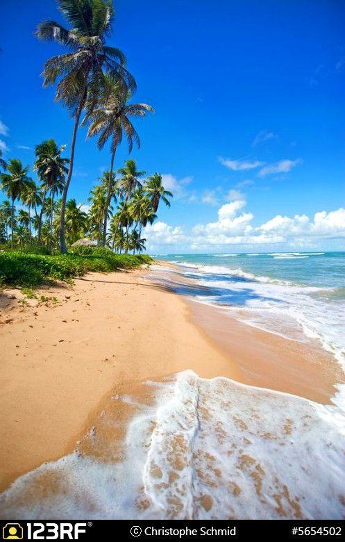 Paradise beach in Praia do Forte, Salvador de Bahia state, Brazil