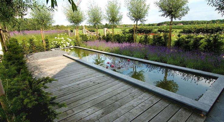 clever use of the plant reflections in the pool