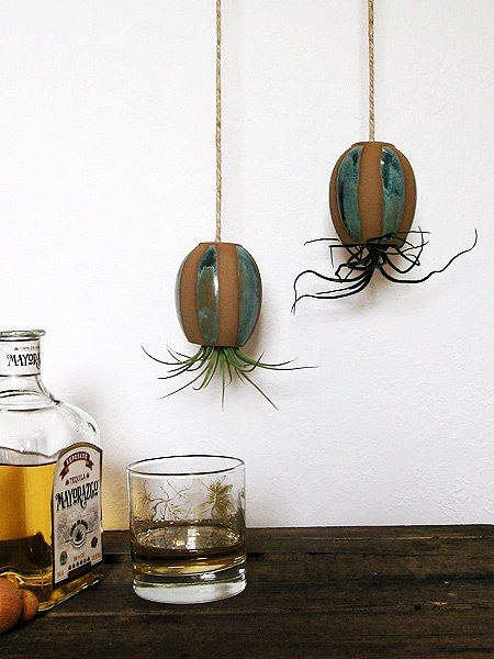 Mike McDowellu0027s Hanging Air Plant Pod Family