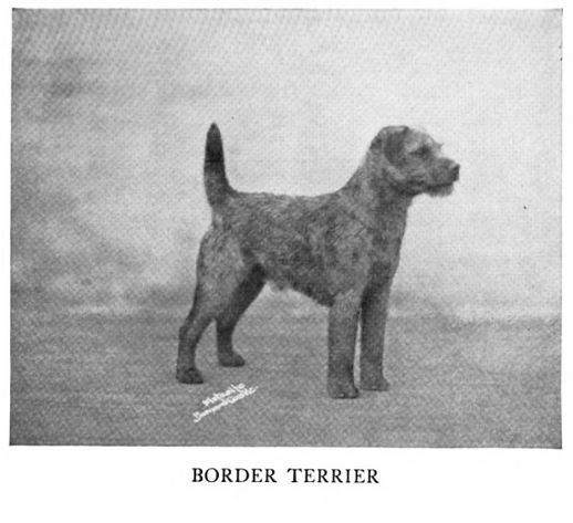 1938 Border Terrier photo 1938_BorderTerrier.jpg