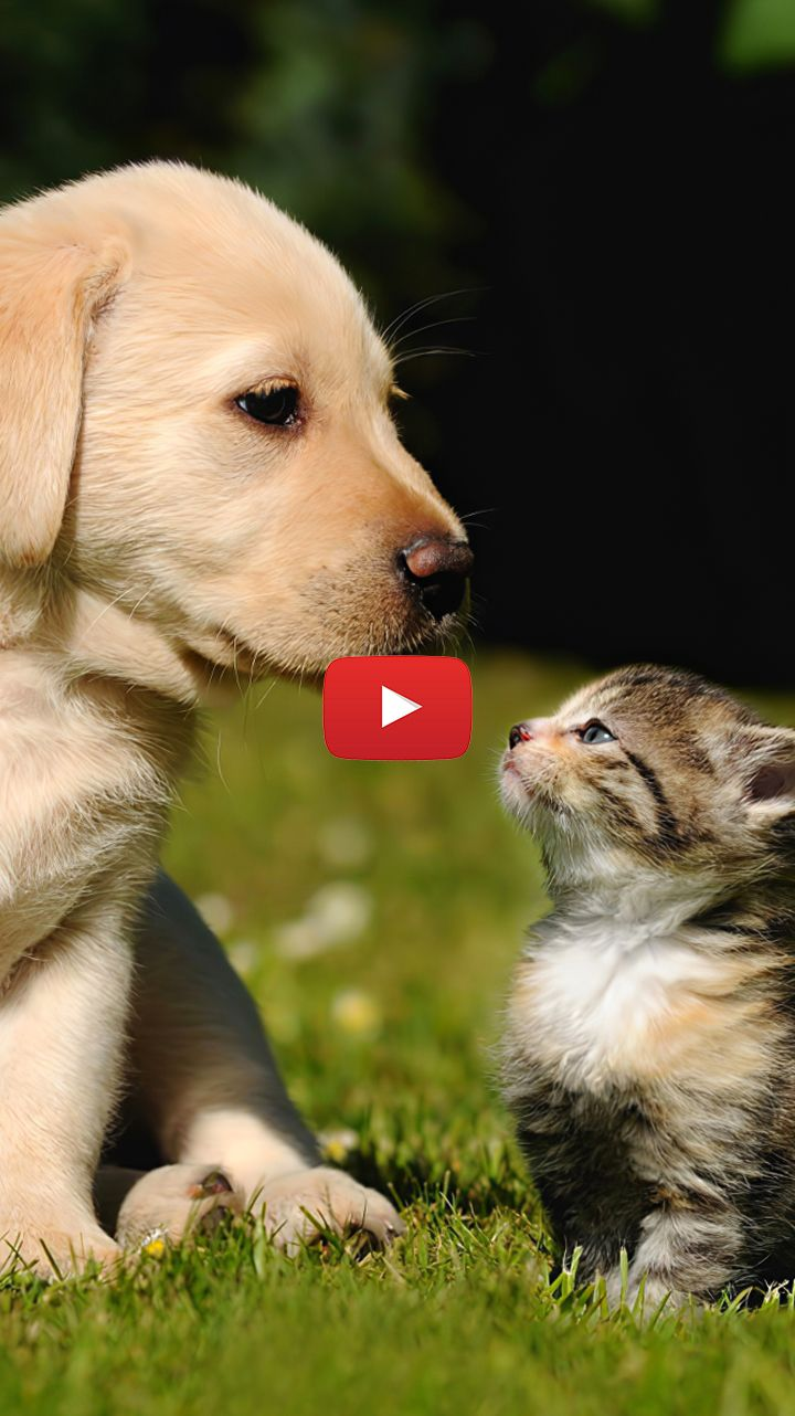 Dog And Cat Together Friendship Friends Forever Dog And Cat Together Wallpaper Cute Cats And Dogs Live Wallpapers Dog Cat