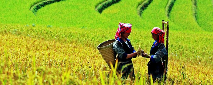 Voyages au Nord Vietnam