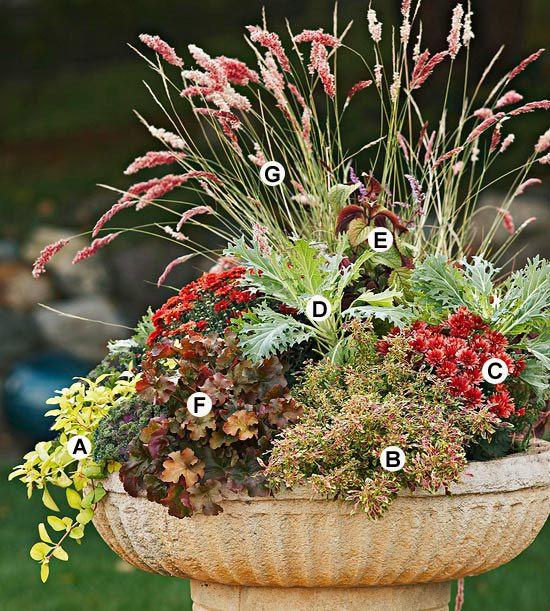 Gartenpflege im Herbst kübel pflanzen lysimachia coleus container