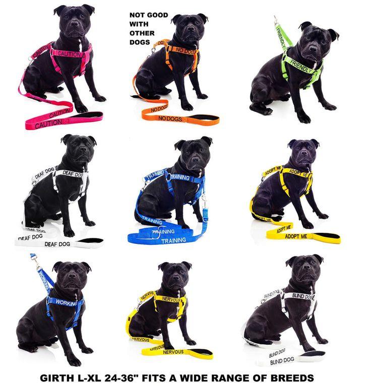 AKITA BOXER STAFFIE STAFF STAFFY BULL TERRIER DOGS NON-PULL HARNESS LEAD / LEASH #Dexil