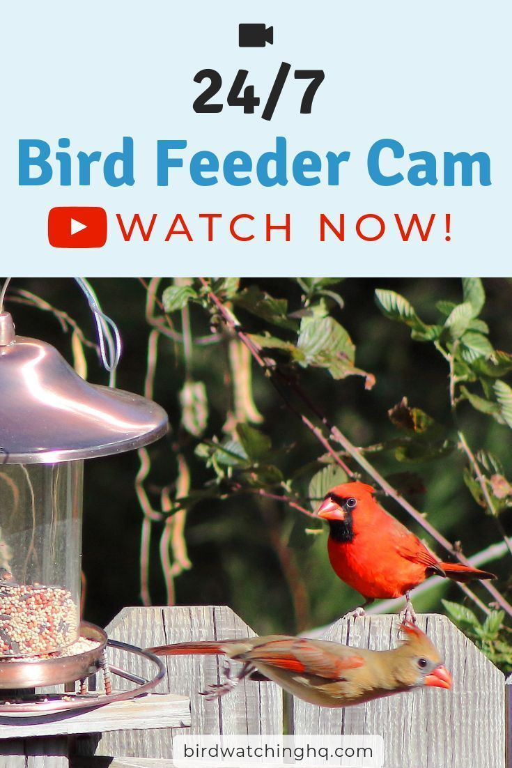 Pin On Backyard Birding