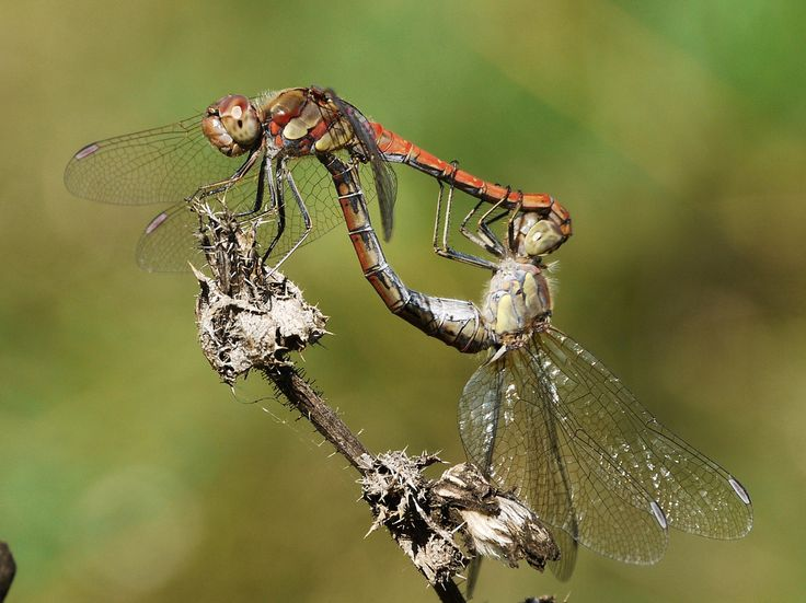 Love is in the Air | Flickr - Photo Sharing!