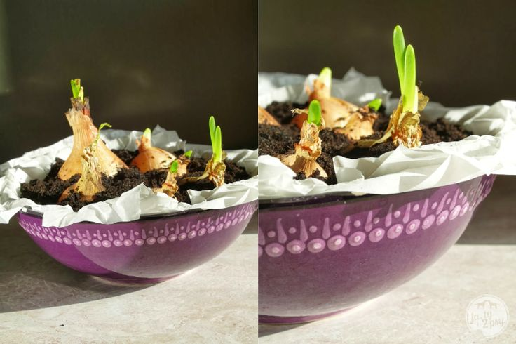 onions in a bowl