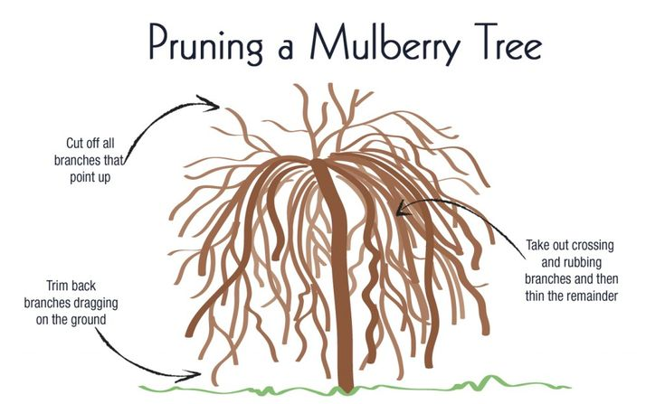 The Appeal of the Weeping Mulberry - View From The Front Porch