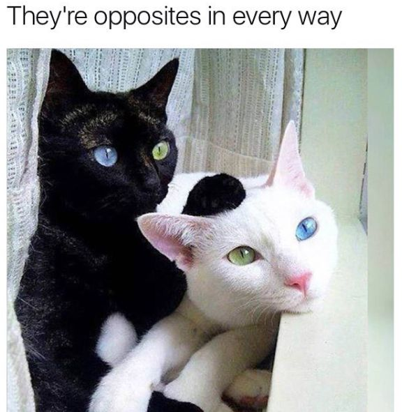 15 Fresh Memes About Cats and Dogs That Will Make Your Day - Cheezburger - Funny Memes | Funny Pictures | Cats | Animals | Gifs | Dogs | Fails