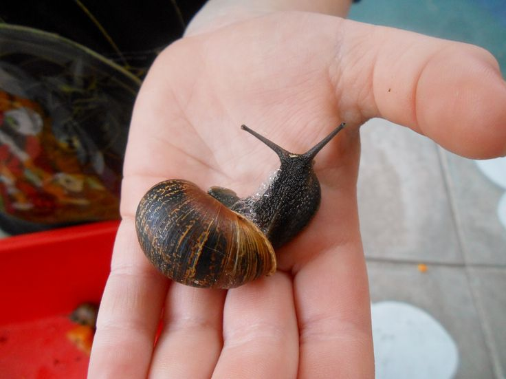 From children interest in insects and bugs, we ended up having a pet snails!