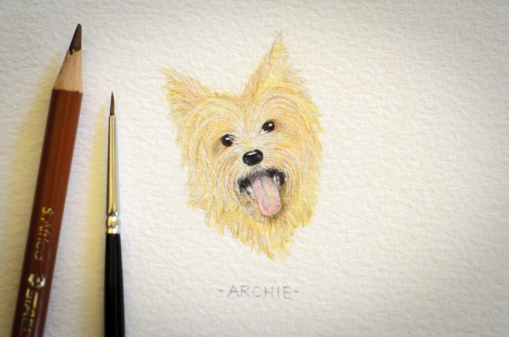 Archie, miniature watercolour