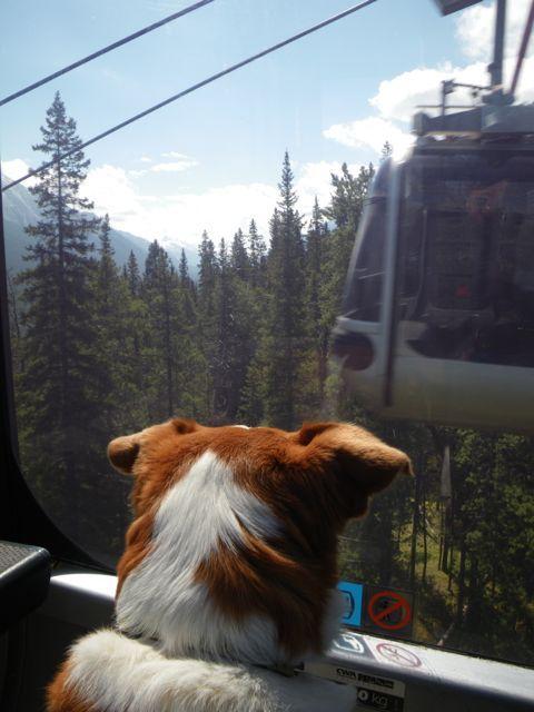 CRUISING UP THE MOUNTAIN (Sulphur Mountain, Banff)