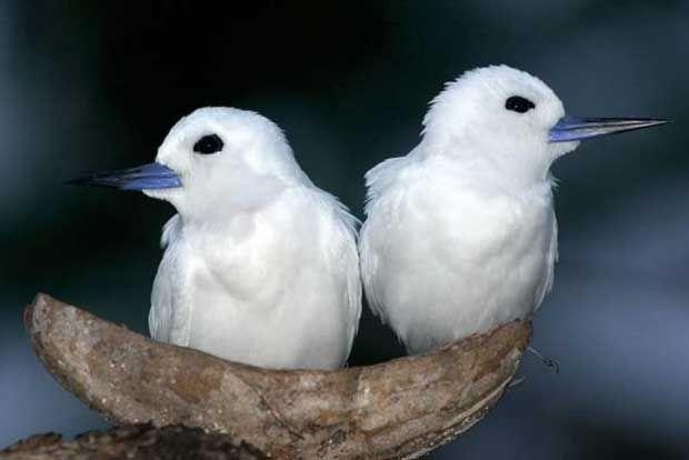 Ακόμα και τα πτηνά απατούν και... παίρνουν «διαζύγιο» http://bit.ly/1sapZzW