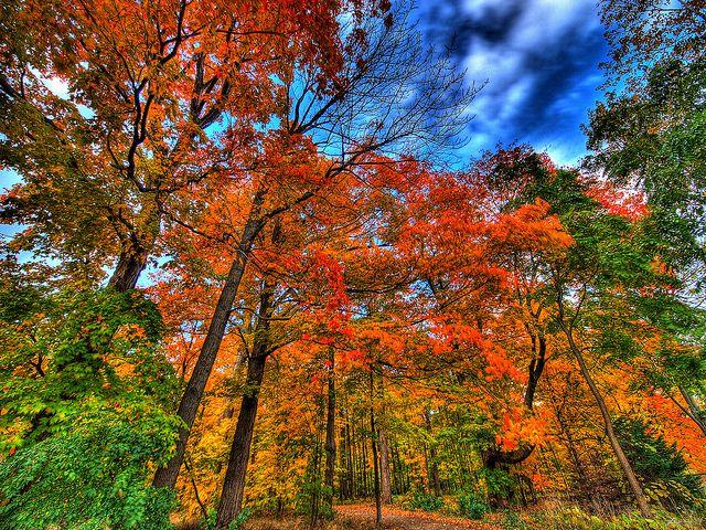 autumn falls... | Flickr - Photo Sharing!