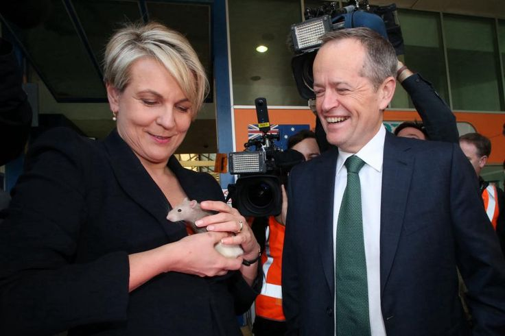 'The longest limerick in election history': best of Bowers – a photo essay | Australia news | The Guardian
