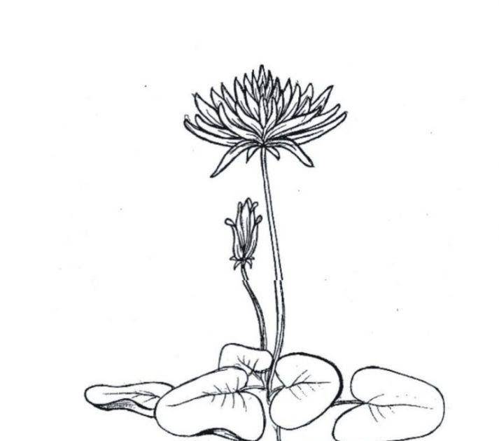 Gambar Bunga Raya Untuk Mewarna Menulismencontengmy Jom Download Himpunan Contoh 2 Gambar Bunga Raya Dlm Format Jpeg Gambar 39 Di 2020 Lukisan Bunga Bunga Gambar