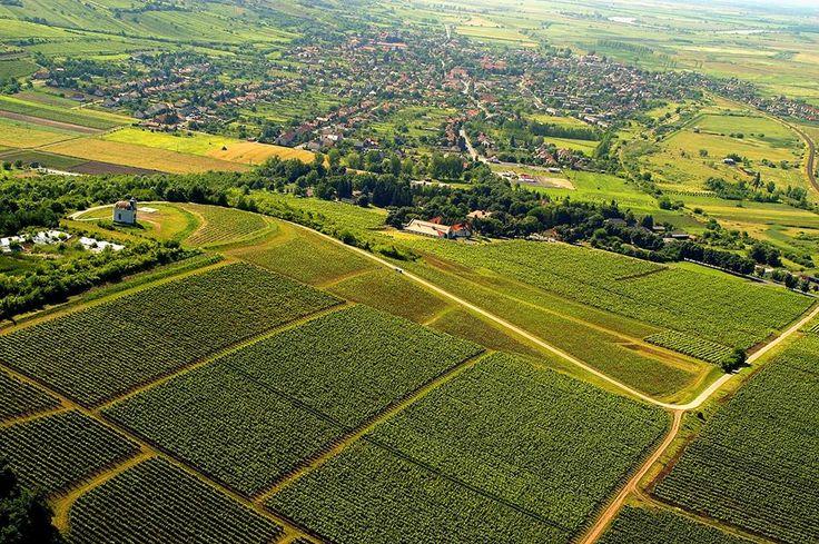 Gróf Degenfeld Winery