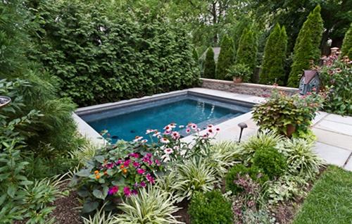 Dense Evergreen Screening Around Small Inground Pool Lush Landscapes Pinterest Pools