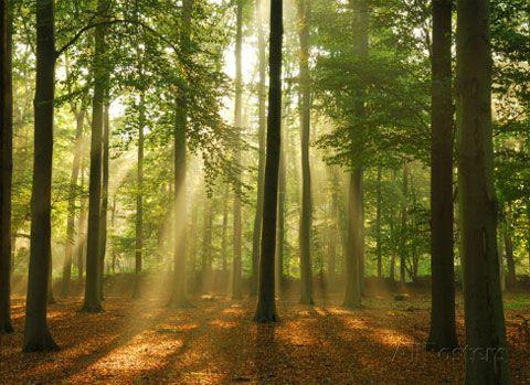 mural fotografico bosque