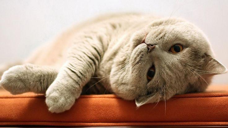 14 способов, как коты демонстрируют свою любовь
