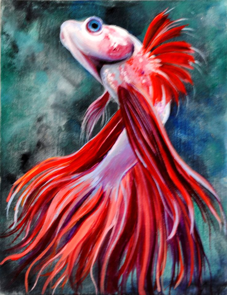 31 best images about beta fish on pinterest blue and for What is a beta fish