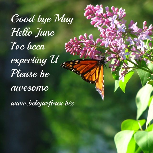 Good bye May, hello June. I've been expecting U. Please be awesome - www.belajarforex.biz #motivasi #motivation #motivator #renungan #pepatah #quotes #quote #inspirasi #inspiration #wisdom #morning #pagi #ID #indonesia #jakarta #instagrammania #instagood #instadaily #instagramania #instapic #instaquote #instanesia #instamood #instacool #iphonesia #photooftheday #forex #gold