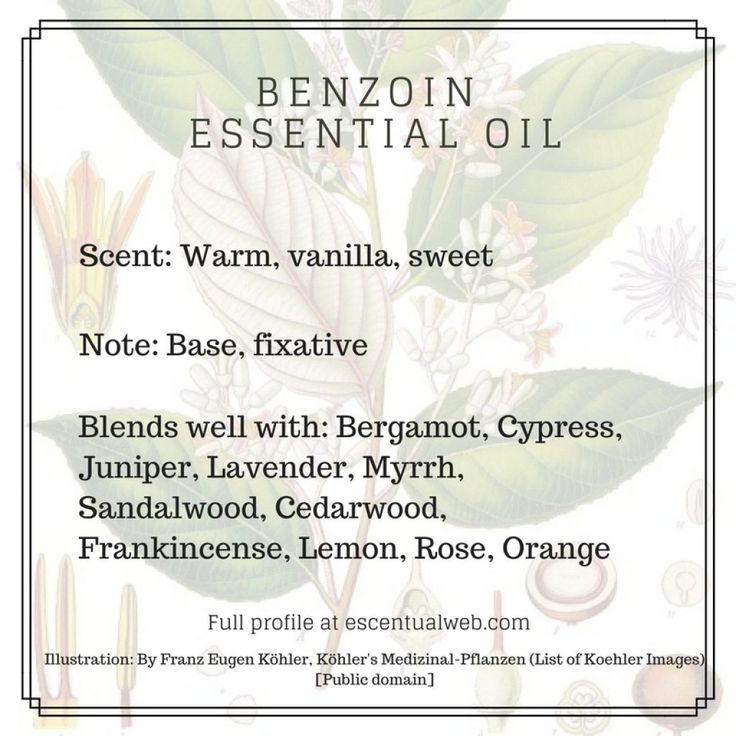 Benzoin (Styrax benzoin) Essential Oil - Escentual Web