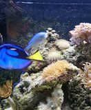 Free Kindle Book -  [Crafts & Hobbies & Home][Free] Aquariums: Everything you need to know.