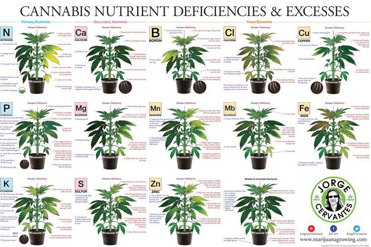 Cannabis Nutrient Deficiencies & Excesses